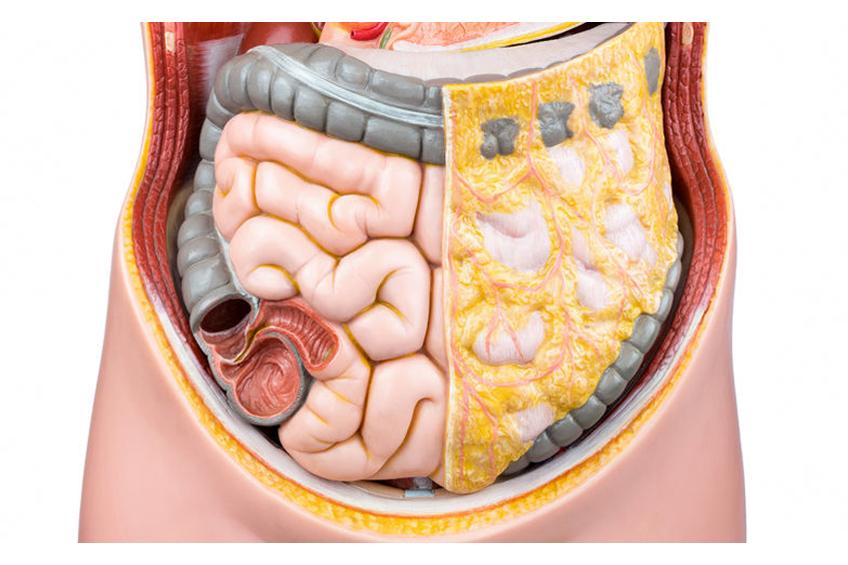 Intestinales Mikrobiom